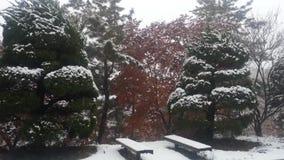 Schnee auf dem Boden und Baumaste in den Winterschneef?llen w?rzen stock footage