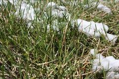 Schnee auf dem Gras Natürliche Abweichung Stockfoto