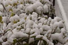 Schnee auf dem kleinen Zaun lizenzfreies stockfoto