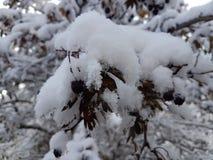 Schnee auf den Bäumen im Fall lizenzfreies stockbild