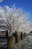 Schnee auf den Bäumen mit blauem Himmel Stockbild