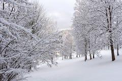 Schnee auf den Baumasten Winter-Ansicht von den Bäumen bedeckt mit Schnee Die Schwere der Niederlassungen unter dem Schnee Lizenzfreies Stockbild