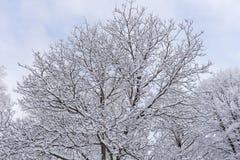 Schnee auf den Baumasten Winter-Ansicht von den Bäumen bedeckt mit Schnee Die Schwere der Niederlassungen unter dem Schnee Lizenzfreies Stockfoto