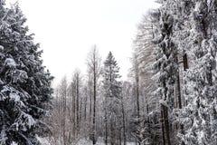 Schnee auf den Baumasten Winter-Ansicht von den Bäumen bedeckt mit Schnee Die Schwere der Niederlassungen unter dem Schnee Lizenzfreie Stockfotografie