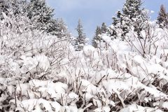 Schnee auf den Baumasten Winter-Ansicht von den Bäumen bedeckt mit Schnee Die Schwere der Niederlassungen unter dem Schnee Stockfotos