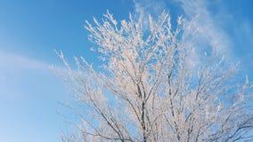Schnee auf den Baumasten Winter-Ansicht von den Bäumen bedeckt mit Schnee Die Schwere der Niederlassungen unter dem Schnee schnee Lizenzfreie Stockbilder