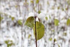 Schnee auf den Blättern stockbilder