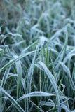 Schnee auf den Blättern im Winter stockfotos