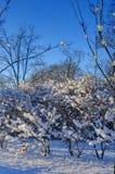 Schnee auf den Niederlassungen Stockfotos