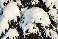 Schnee auf den Niederlassungen Stockfoto