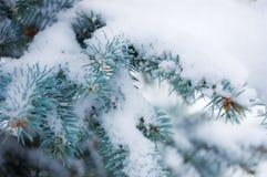 Schnee auf den Niederlassungen des Blaus Lizenzfreie Stockfotos