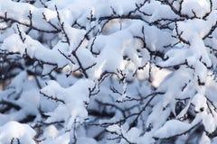 Schnee auf den Niederlassungen eines Baums Stockfotografie