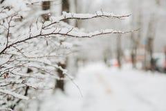 Schnee auf den Niederlassungen im Winter Stockfotos