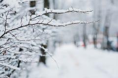 Schnee auf den Niederlassungen im Winter Stockfotografie