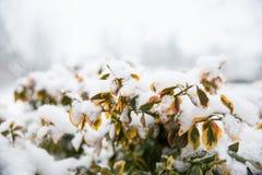 Schnee auf der Anlage Lizenzfreie Stockbilder