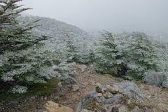 Schnee auf der Spur Lizenzfreie Stockfotografie