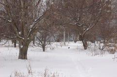 Schnee auf der Straße in der Stadt Stockfotografie