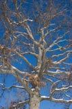 Schnee auf einem Baum Stockfotografie