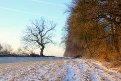 Schnee auf einem Feld am Wald Lizenzfreie Stockfotos
