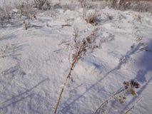 Schnee auf einem Gras Stockfotos
