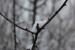 Schnee auf einem Zweig Stockfotos