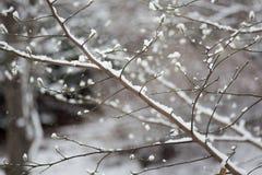 Schnee auf einem Zweig Lizenzfreie Stockfotos