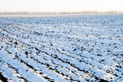 Schnee auf Feld lizenzfreie stockfotografie