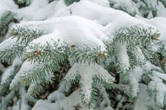 Schnee auf Fichte Stockfotografie