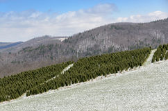 Schnee auf Frühling bei blauem Ridge Parkway lizenzfreie stockfotografie