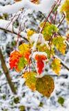 Schnee auf Gelbblättern im Wald Stockfotografie
