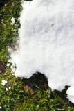 Schnee auf Gras Stockfotografie