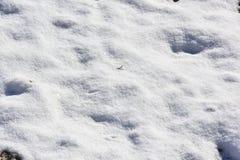 Schnee auf Gras unter contrasty Sonne Lizenzfreie Stockfotografie