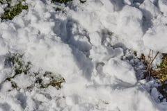 Schnee auf Grastageslicht Stockfoto