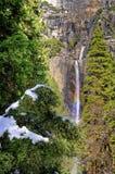 Schnee auf Kiefer und Yosemite Falls, Yosemite Nationalpark stockfoto