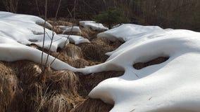 Schnee auf langem Gras Lizenzfreies Stockbild