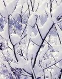 Schnee auf meinen Zweigen Stockfoto