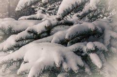 Schnee auf Niederlassung Stockfoto