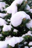 Schnee auf Tannen-Zweigen im Winter Stockfotos