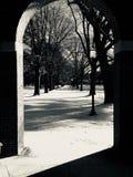 Schnee auf Tannenbaumzweigen stockfoto