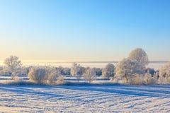 Schnee auf Tannenbaumzweigen Stockfotografie
