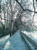 Schnee auf Tannenbaumzweigen Lizenzfreie Stockbilder