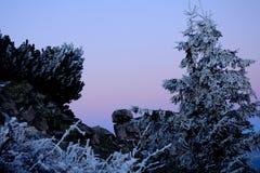 Schnee auf Tannenbaumzweigen lizenzfreies stockbild