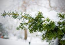 Schnee auf Weihnachtsbaum Stockfotografie