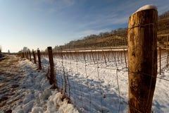 Schnee auf Weinberg Stockfoto