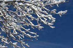 Schnee auf Zweig Stockbild