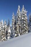 Schnee, Bäume, blauer Himmel Lizenzfreies Stockfoto