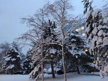 Schnee, Bäume und Fensterlichter Lizenzfreies Stockbild