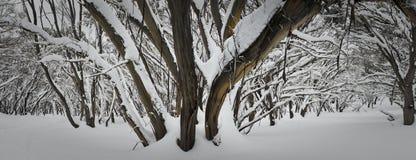 Schnee-Baum Lizenzfreies Stockfoto