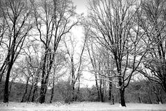 Schnee bedeckt Stockbilder