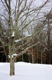 Schnee bedeckt lizenzfreie stockfotografie